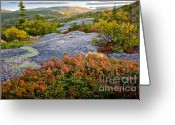October Greeting Cards - Cadillac Rock Garden Greeting Card by Susan Cole Kelly