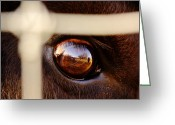 Business Decor Greeting Cards - Caged Buffalo Reflects Greeting Card by Robert Frederick