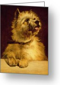 1856 Greeting Cards - Cairn Terrier   Greeting Card by George Earl