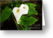 Dandelion Pyrography Greeting Cards - Cala Lily Greeting Card by The Kepharts