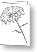 Home Greeting Cards - Calendula Greeting Card by Christy Beckwith