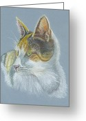 Animal Portrait Pastels Greeting Cards - Calico Callie Greeting Card by Carol Wisniewski