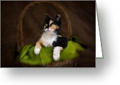 Calico Cat Greeting Cards - Calico Cat in Basket Greeting Card by Jai Johnson