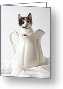 Pussy Greeting Cards - Calico kitten in white pitcher Greeting Card by Garry Gay