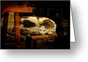 Calico Cat Greeting Cards - Calico Greeting Card by Lois Bryan
