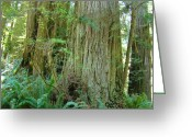 Landscape Framed Prints Greeting Cards - Califorina Coastal Redwood Trees art prints Greeting Card by Baslee Troutman Landscape Photography
