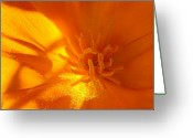 Orange Flower Photo Greeting Cards - California Poppy Greeting Card by Liz Vernand