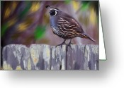 Transformative Art Greeting Cards - California Quail Greeting Card by Lisa Redfern