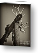 Elk Greeting Cards - California Ranch Gate   Greeting Card by Gus McCrea