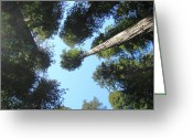 Popular Framed Prints Greeting Cards - California Redwood Trees Fine Art Prints Forest Greeting Card by Baslee Troutman Fine Art Prints