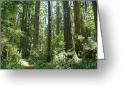 Featured Landscape Art Greeting Cards - California Redwood Trees Forest art prints Greeting Card by Baslee Troutman Photography Prints