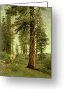 Romanticist Greeting Cards - California Redwoods Greeting Card by Albert Bierstadt