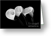 Calla Lilies Greeting Cards - Calla Lilies - Black and White Greeting Card by Larry Carr