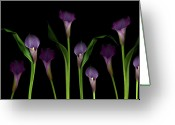 Purple Flower Greeting Cards - Calla Lilies Greeting Card by Marlene Ford