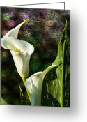 Larry Walker Greeting Cards - Calla Lily - P. Bright Greeting Card by J Larry Walker