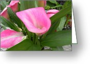 Adrienne Petterson Greeting Cards - Calla Lily Greeting Card by Adrienne Petterson