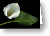 Botanicals Mixed Media Greeting Cards - Calla Lily Greeting Card by Christian Slanec
