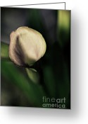 Artography Greeting Cards - Calla Lily Floral Greeting Card by Jayne Logan