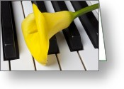 Composing Greeting Cards - Calla lily on keyboard Greeting Card by Garry Gay