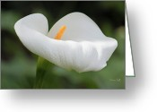 Calla Lily Greeting Cards - Calla Greeting Card by Suzanne Gaff