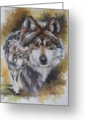 Wolves Drawings Greeting Cards - Callidity Greeting Card by Barbara Keith