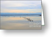 Tong River Greeting Cards - Calm Morning Waters Greeting Card by Wingsdomain Art and Photography
