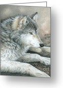 Wolves Drawings Greeting Cards - Calm Wolf Greeting Card by Carla Kurt