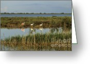 Bodies Greeting Cards - Camargue.Etang of Vacarres Greeting Card by Bernard Jaubert