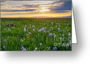 Food Source Greeting Cards - Camas Fields Greeting Card by Idaho Scenic Images Linda Lantzy