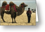Tourists And Tourism Greeting Cards - Camel Rides, Beach, Bohai Sea, At Great Greeting Card by Raymond Gehman