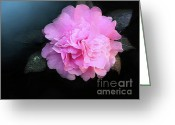 Dew Drop Greeting Cards - Camelia Greeting Card by Robert Foster