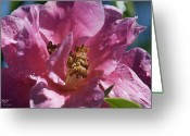 Theaceae Greeting Cards - Camellia Greeting Card by Kenneth Hadlock