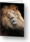 Cats Greeting Cards - Cameron Greeting Card by Big Cat Rescue