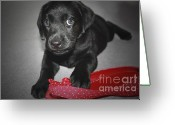 Black Lab Puppy Greeting Cards - Can I Have It  Greeting Card by Cathy  Beharriell