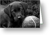 Black Lab Puppy Greeting Cards - Can We Play  Greeting Card by Cathy  Beharriell