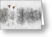 Flooded Greeting Cards - Canada Geese in Fog Greeting Card by Patrick Ziegler