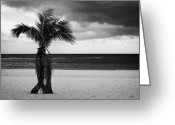 Imported Greeting Cards - Canary Islands Date Palm Phoenix canariensis tree with dark cloudy sky Playa De Las Teresitas Greeting Card by Joe Fox