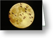 Canada Goose Greeting Cards - Canda Geese and Moon Greeting Card by Kenneth Fink and Photo Researchers