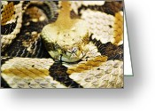 Venom Greeting Cards - Canebrake Greeting Card by Scott Pellegrin