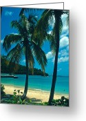 Island Photos Greeting Cards - Caneel Bay Palms Greeting Card by Kathy Yates