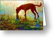 John Kolenberg Greeting Cards - Canelo Drinking Water By The Lake Greeting Card by John  Kolenberg