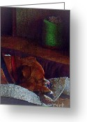 John Kolenberg Greeting Cards - Canelo Sleeping Greeting Card by John  Kolenberg