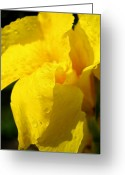 Canna Greeting Cards - Canna at Sunrise Greeting Card by Todd A Blanchard