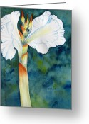 Carlin Greeting Cards - Canna Greeting Card by Carlin Blahnik