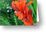 Canna Greeting Cards - Canna flower Greeting Card by Roxanne Colvin