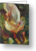 Canna Greeting Cards - Canna in Light Greeting Card by Elizabeth Taft