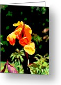 Canna Greeting Cards - Canna in Summer Greeting Card by Dorrie Pelzer