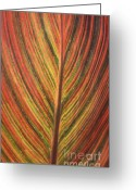 Canna Greeting Cards - Canna Leaf Greeting Card by Patrick  Short
