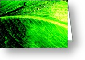 Canna Greeting Cards - Canna Leaf with Raindrops Greeting Card by Beth Akerman