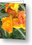 Canna Greeting Cards - Canna Lilies Greeting Card by David Bearden